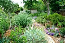 california native plants for the garden. southern california native plants landscaping a back yard of natives in garden design for the d
