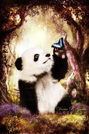 Quotes About Pandas Delectable 48 Best AM♡R Images On Pinterest Quotes Love Love And Messages