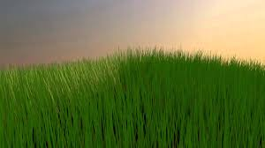 green grass field animated. Test Animation #7 - Growing Grass Green Field Animated