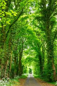 hd image of nature. Interesting Image Gray Concrete Road Top Between Green Trees With Hd Image Of Nature