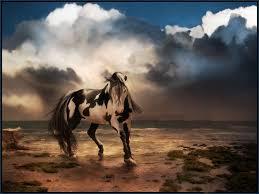 27299 Desktop Backgrounds Horses