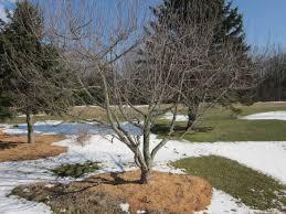 Pruning Fruit Trees And Grafting  English Speak EnglishDormant Fruit Trees