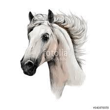 white horse head. Fine Horse The White Horse Head Profile Sketch Vector Chart Color Picture To White Horse Head R