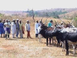 Bildergebnis für Ethiopian politician's goats 'taken hostage'