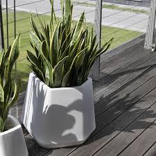 Casa immobiliare accessori: piante in vaso da esterno