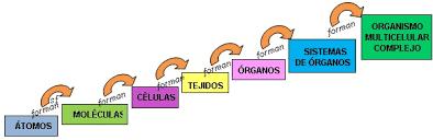 Resultado de imagen para niveles de organizacion de los seres vivos