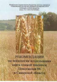 Технология возделывания яровой пшеницы на планируемый урожай в  Технология выращивания озимой пшеницы в самарской области