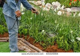 garden insecticide. Workingman Spraying Insecticide The Garden