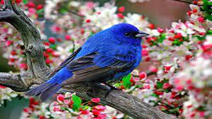 Bird photo gallery download