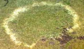 Turf Disease Turf Pest Disease Control