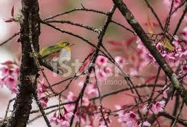 """Résultat de recherche d'images pour """"joli arbre en fleurs"""""""