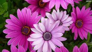 beautiful purple and white flowers. Beautiful Purple Intended Beautiful Purple And White Flowers E