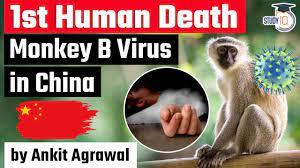 Monkey B Virus led first human death reported in China - Is Monkey B  deadlier than Coronavirus? - YouTube