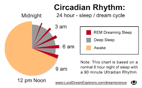 Sleep Dream Cycle And The Circadian And Ultradian Rhythm