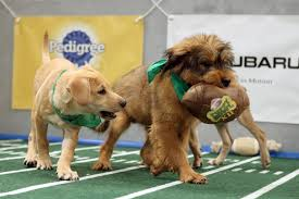 puppy bowl x halftime show. Unique Puppy And Puppy Bowl X Halftime Show