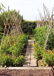 tomato trellis cages
