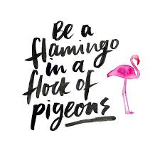 Why Blend In When You Could Stand Out Mantra Quote Flamingo Magnificent Stand Out Quotes