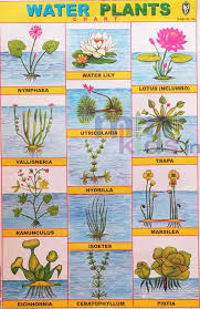 Plant Chart Water Plants Chart Number 144 Minikids In