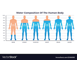 Body And Water Chart