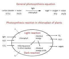 phtosynthesis equation the synthesis of carbohydrates from co2 and h2o with the help of external energy photosynthesis