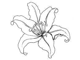 Printable Lily Flower Coloring Pages Free