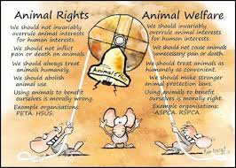 philosophies of animal rights animal ethics animal welfare  animal rights animal welfare