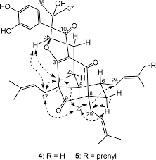 Polyprenylated benzoylphloroglucinols with dna polymerase inhibitory activity from the fruits of garcinia schomburgkiana