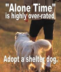 Rescue Dog Quotes Interesting Dog Quote Future House Pinterest Animal Shelter Shelter And