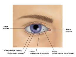 ocular side effects of systemically