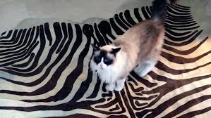 cleaning dog from carpet dry urine natural tips cleaning dog from carpet