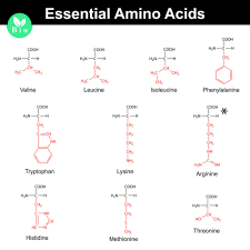 Amino Acid Chart Essential Non Essential and BCAA Amino Acid Chart 1