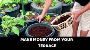 organic terrace gardening make money
