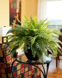 artificial plants for office decor. Premier Fern Silk Plant GREEN Artificial Plants For Office Decor B