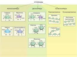 Изучаем биологию Углеводы Поли ди и моносахариды называют общим термином углеводы К углеводам относятся соединения обладающие разнообразными и часто совершенно различными