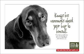 humane society ads. Contemporary Ads Humane Society Ads On Behance And