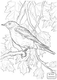 Click The Eastern Bluebird Coloring Pages Sparrow Coloring Pages 17