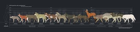 Wolf Species Size Chart Wolf Species Size Comparison By Tanathe On Deviantart