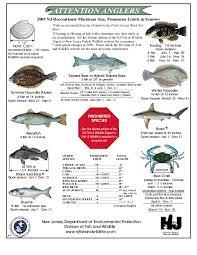 Fish Size Chart Nj Salt Fish Regshistory