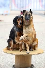 Les animaux font leur cinéma | Dog Trainer