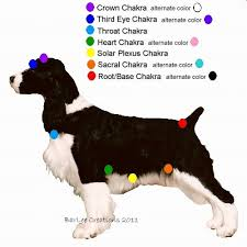 Animal Chakra Chart Homework My Dog Didnt Eat Find Out Where The Charka Points