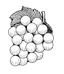 black and white grapes clipart.  Grapes Grapes Clipart Grape Grape White Transparent Clip Art Image Outline In Black And Clipart V