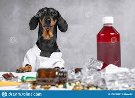 Dachshund Dog In A White Lab Coat ...