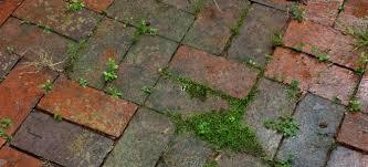 moss growing between patio