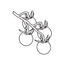 ミニトマト塗り絵 イラスト素材 2583697 フォトライブラリー