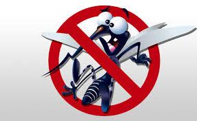 Resultado de imagem para imagem mosquito da dengue