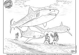 This coloring sheet is perfect to introduce your little kids to this fierce animal. Shark Education Coloring Sheets