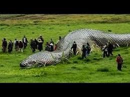 amazon rainforest animals anaconda. Documentary AMAZON Jungle Predators WILD ANIMALS Anaconda Snake Jaguar Piranha Fish Das Pro Intended Amazon Rainforest Animals