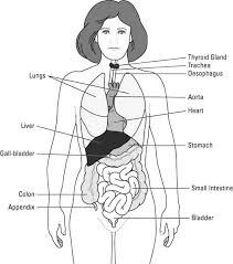 Human Body Whole Human Body Diagram Coloring Pages Craftiness