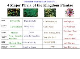 Kingdom Plantae Characteristics Chart Kingdom Plantae Life On Land Requires Adaptations For Water