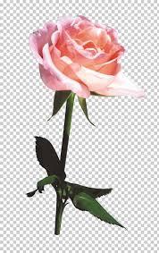beach rose flower bouquet gratis flower bouquet beautiful bouquet png clipart